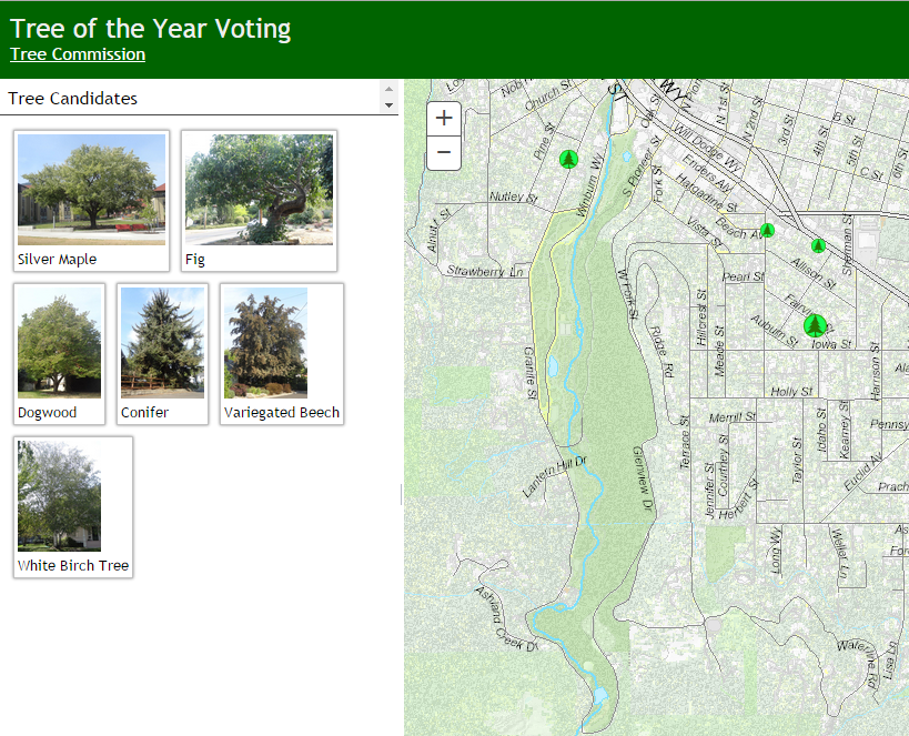 Vote For Your Favorite Tree